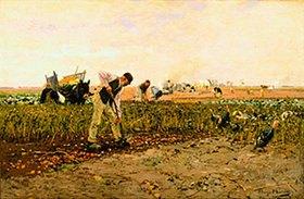 Hugo Mühlig: Kartoffelernte