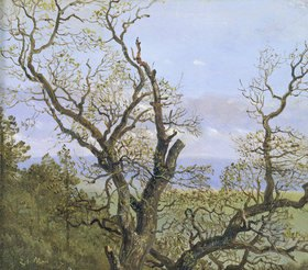 Carl Gustav Carus: Knorrige Eichen im Frühling