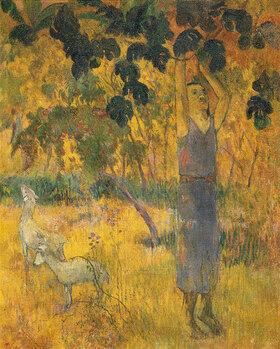 Paul Gauguin: Eingeborener bei der Obsternte