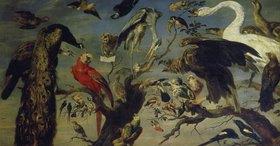 Frans Snyders: Das Vogelkonzert