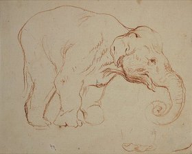 Daniel Chodowiecki: Stehender  Elefant