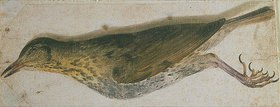 Unbekannter Meister: Tote Drossel