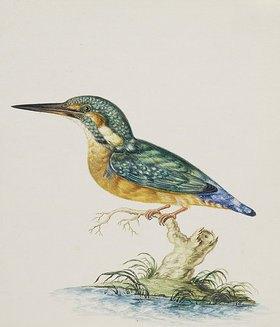 Johann Ludwig Morgenstern: Ein Eisvogel