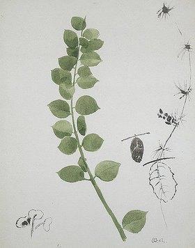 Odilon Redon: Pflanzenstudie (Histoire naturelle)