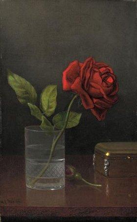 Martin Johnson Heade: Die Königin der Rosen