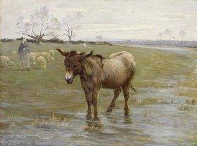 Henri Le Sidaner: Der Esel