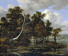 Jacob Isaacksz van Ruisdael: Eichen an einem See mit Wasserrosen