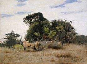 Wilhelm Kuhnert: Antilopen