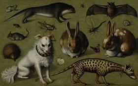 Ludger tom d.J Ring: Tierbild mit Ginsterkatze