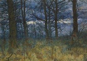William Fraser Garden: Dämmerung im Wald