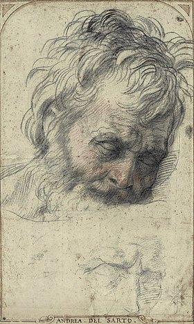 Andrea del (A.d'Agnolo) Sarto: Kopf des heiligen Josef, nach unten blickend