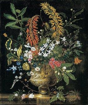Pieter Casteels III: Die zwölf Monate. Ein floraler Kalender - Januar