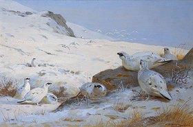 Archibald Thorburn: Alpenschneehühner