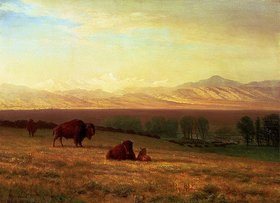 Albert Bierstadt: Buffalos in ebener Landschaft