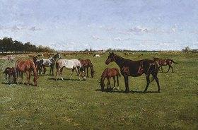 George Koch: Stuten mit ihren Fohlen