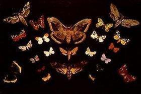 Tivadar Csontváry-Kosztka: Die Schmetterlinge