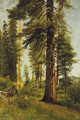 Albert Bierstadt: California Redwoods