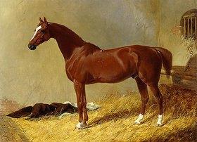 John Frederick Herring d.Ä.: Ein rotbraunes Rennpferd in einem Stall