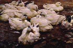 Alexander Koester: Enten auf einem Fluss