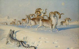 Joseph Wolf: Ein Schneeleopard greift Schafsböcke an