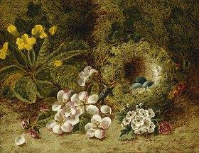 Oliver Clare: Apfelblüten, eine Primel und ein Vogelnest im Moos