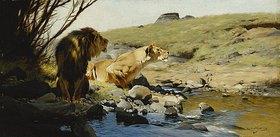 Wilhelm Kuhnert: Ein Löwe und eine Löwin an einem Bach