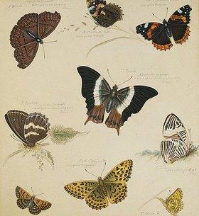 Sydenham Teast Edwards: Schmetterlingsstudie