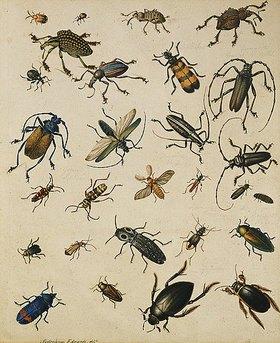 Sydenham Teast Edwards: Insektenstudie