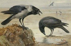 Archibald Thorburn: Eine Nebelkrähe und eine Rabenkrähe