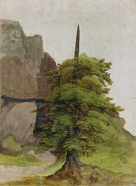 Albrecht Dürer: Baum
