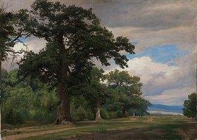 Johann Wilhelm Schirmer: Großer Baum auf Waldschneise (Studie)