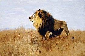 Wilhelm Kuhnert: Löwe auf der Suche nach Beute