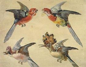 Alexandre Francois Desportes: Vogelstudie: zwei Papageien, ein Wiedehopf und ein Eichelhäher (Etudes d'Oiseaux: Deux Petits Perroquets, une Huppe et un Geai)
