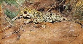 Wilhelm Kuhnert: Ein Leopard