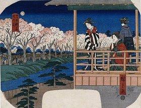 Utagawa Hiroshige: Kirschblüte am Ufer bei Shinjuku, Yotsuya