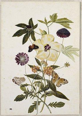 Thomas Robins Jr: Seidenpflanze, Mohn und Hibiskus mit Schmetterlingen und einem Käfer