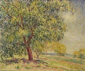 Alfred Sisley: Nußbäume bei Sablons