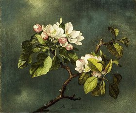 Martin Johnson Heade: Apfelblüten