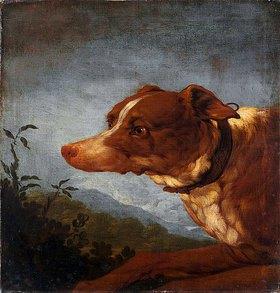 Johann Melchior Roos: Hund