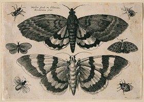 Wenzel Hollar: Zwei Motten und sechs Insekten. 1646. Aus dem 'Muscarum Scarabeorum', Antwerpen 1646, Tf