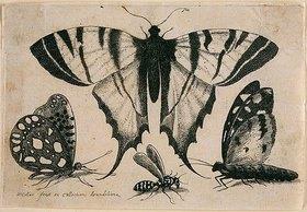 Wenzel Hollar: Drei Falter und eine Wespe. 1646. Aus dem 'Muscarum Scarabeorum', Antwerpen