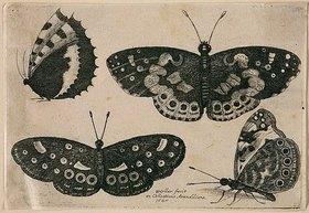 Wenzel Hollar: Vier Schmetterlinge. 1646. Aus dem 'Muscarum Scarabeorum', Antwerpen 1646, Tf. 8 (nummeriert oben rechts). Bezeichnet unten Mitte: 'WHollar fecit / ex Collectione Arundeliana / 1646.'
