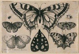 Wenzel Hollar: Fünf Schmetterlinge, eine Motte und zwei Käfer. 1646. Aus dem 'Muscarum Scarabeorum', Antwerpen 1646, Tf. [6/2]. Bezeichnet unten links: 'WHollar fecit ex Collectione Arundeliana 1646.'