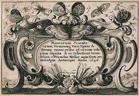 Wenzel Hollar: Titelkupfer zum 'Muscarum Scarabeorum', Antwerpen