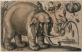 Wenzel Hollar: Elefant, Affe, Heuschrecke und Pflanzen