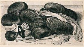 Wenzel Hollar: Pelzwerk und Putz. 1647. Bezeichnet unten Mitte: 'WHollar fecit Aqua forti 1647; unten rechts: 'Antuerpiae', Pennington 1982, Nr