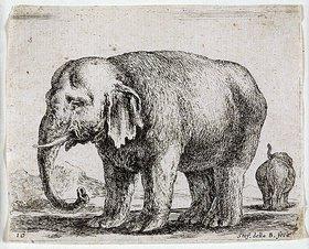 Stefano della Bella: Elefant