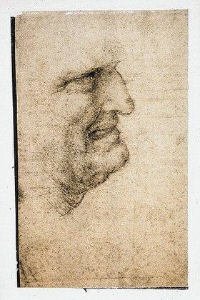 Leonardo da Vinci: Studie: Kopf eines alten Mannes