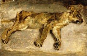Eugene Delacroix: Eine schlafende Löwin