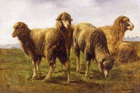 Maria-Rosa Bonheur: Schafe auf einer Weide